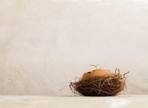 nest egg accumulation phase